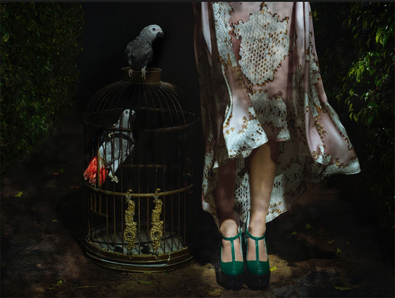 Bird Casting